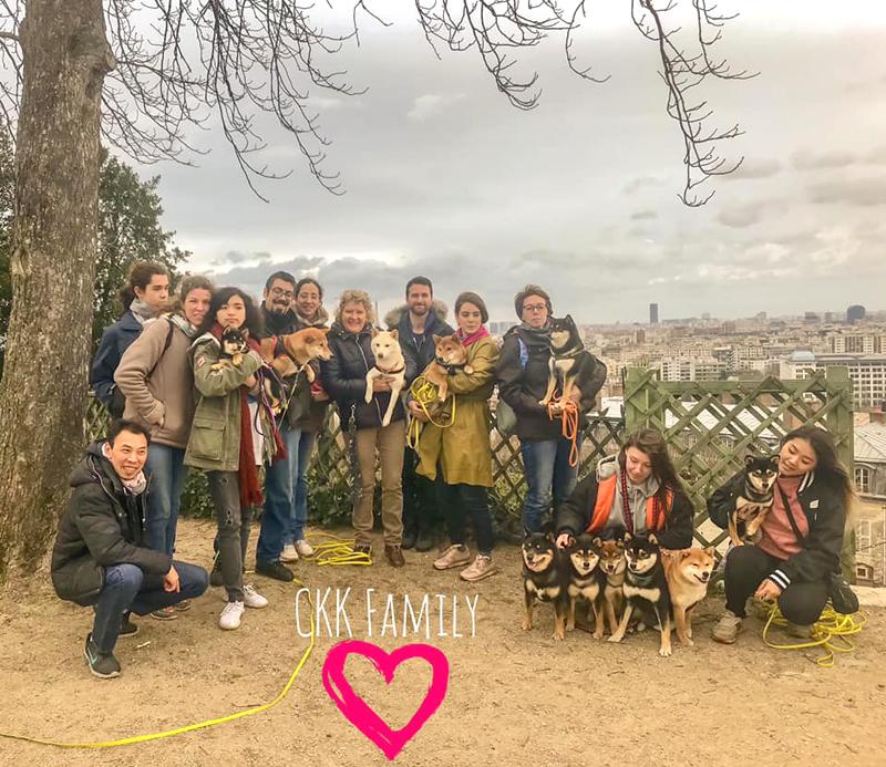 balade-ckk-shiba-inu-chien-japonais