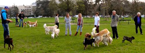 CKK-Education-Promenade-canine-balade-chien-rencontre-groupe-meute-social-chien-bien-dans-ses-pattes-shiba-inu-congenere-rappel-communication-canine