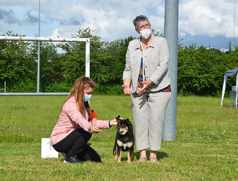 GORO-shiba-inu-noir-expo-canine-regionale-elevage-Chuken-Kiku-Kensha-Meilleur-Veteran-BIS-2021-bretagne-lalleu-CKK