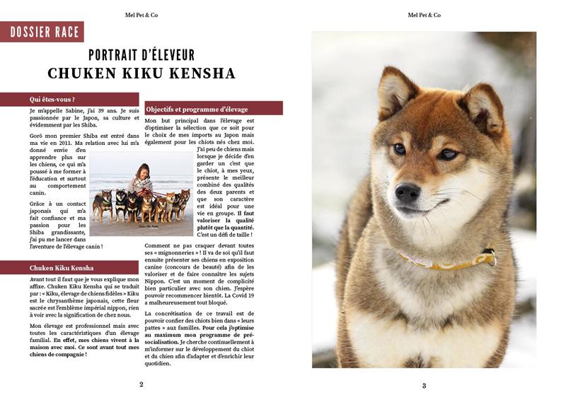 Interview-shiba-inu-elevage-chuken-kiku-kensha-web-magazine-mel-pet-and-co-portrait-eleveur-CKK-race-japonaise-chien-japonais