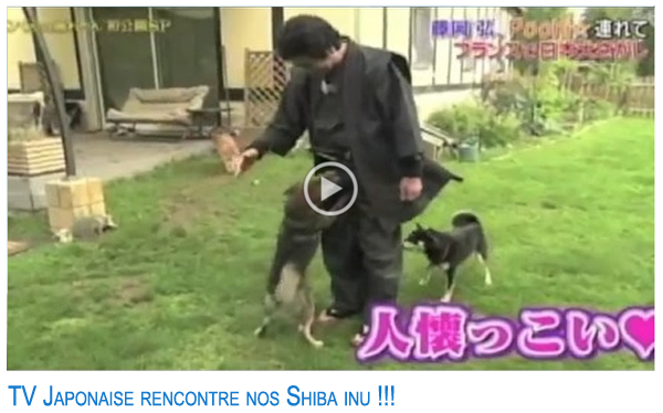 TV-japonaise-elevage-CKK-shiba-inu-japan-video
