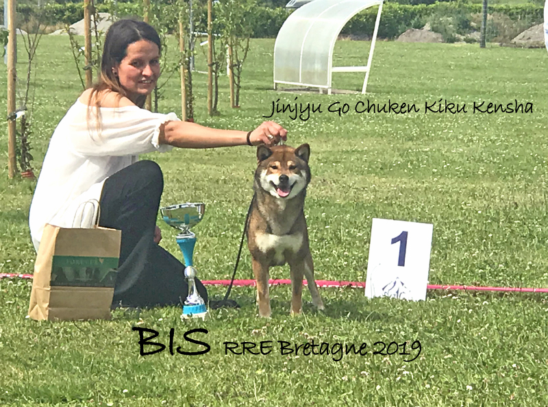 Jinjyu-go-chuken-kiku-kensha-shiba-inu-BIS-best-in-show-RRE-Bretagne-2019-Regionale-elevage-meilleur-chien-expo-male-sesame-goma-stud-CFCNSJ