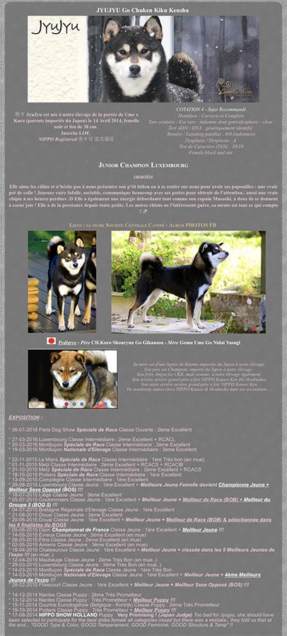 JyuJyu-go-chuken-kiku-kensha-shiba-inu-elevage-CKK-retraite-femelle-female-noir-kuroshiba-black-tan-nippo-chien-japonais-junior-champion