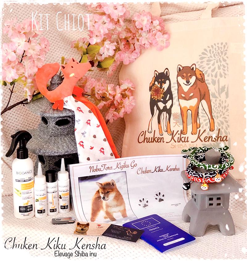 Kit-chiot-shiba-inu-elevage-chuken-kiku-kensha-CKK-pedigree-LOF-NIPPO-certificat-veterinaire-attestation-vente-conseils-sac-tote-bag-doudou-renard-collier-japonais-karakusa-clochette-empreinte-pattes-shibe-kawaii