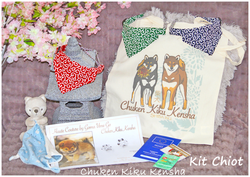 kit-chiot-shiba-inu-elevage-chuken-kiku-kensha-collier-japonais-sac-empreinte-pattes
