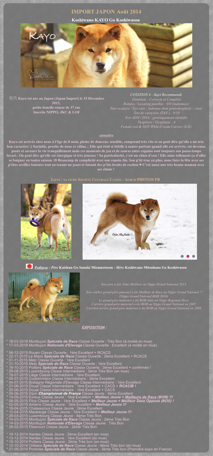 Koshiwasou-Kayo-chuken-kiku-kensha-shiba-inu-elevage-CKK-retraite-femelle-female-rousse-fauve-redshiba-japan-import-japon-chien-japonais