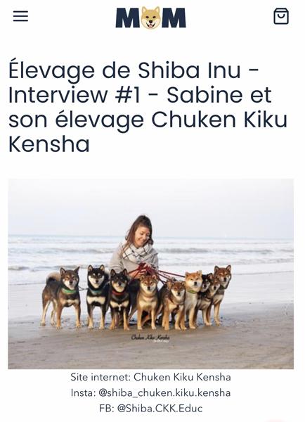 MMShib-interview-Chuken-kiku-kensha-elevage-shiba-inu-CKK-chien-japonais-question-conseil-boutique-blog