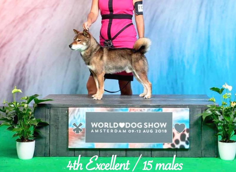Musashi-world-dog-show-amsterdam-2018-championnat-du-monde-shiba-inu-sesame