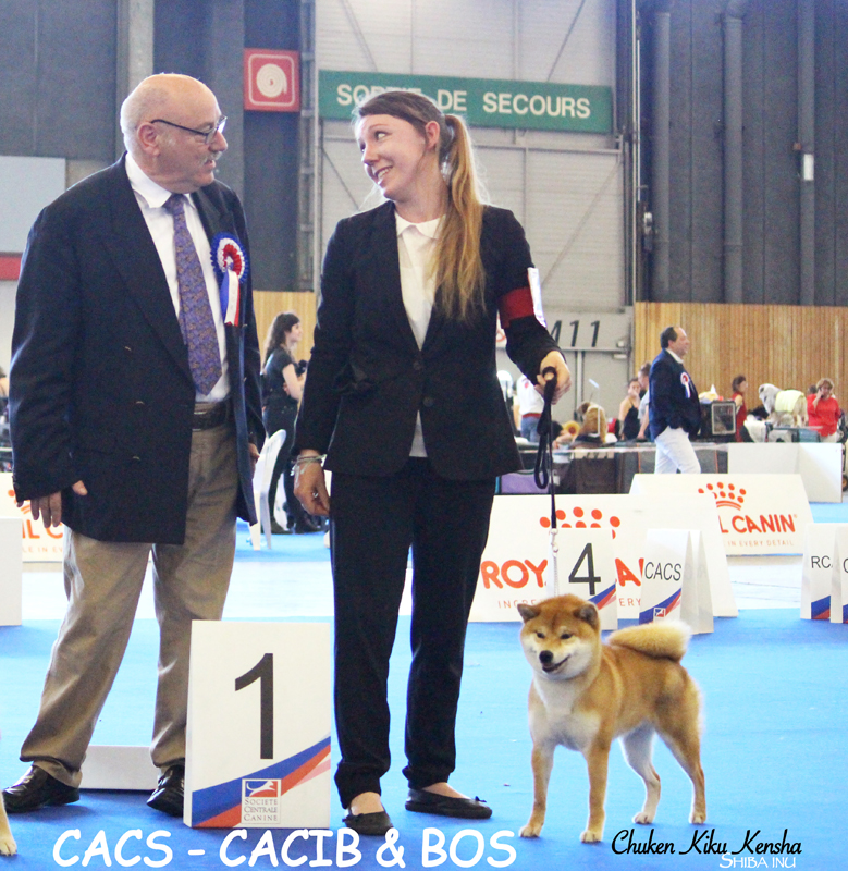 NOBUKO-nobutora-kigiku-go-chuken-kiku-kensha-red-shiba-inu-rousse-fauve-femelle-female-championnat-de-france-expo-2019-championship-paris-dog-show-championne-titre