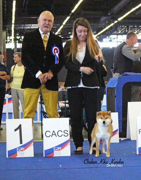 NOBUKO-nobutora-kigiku-go-chuken-kiku-kensha-red-shiba-inu-rousse-fauve-femelle-female-grand-prix-de-france-expo-2019--paris-dog-show-speciale-de-race-christen-lang-BOB