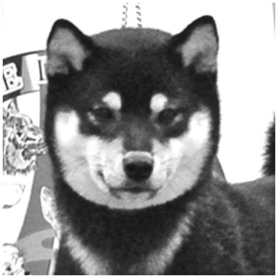 Nanaki-go-fukaya-shunjuusou-nananishiki-male-black-tan-shiba-inu