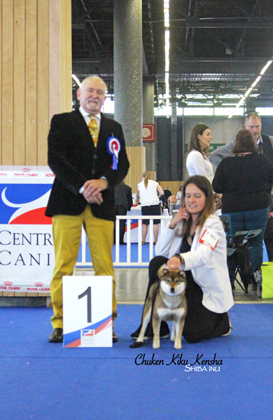 OKI-ohatsugiku-no-nishiki-sakura-go-chuken-kiku-kensha-goma-shiba-inu-sesame-femelle-female-grand-prix-de-france-expo-2019-paris-dog-show-junior-latin-winner-christen-lang-BOB-young