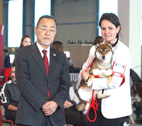 Oki-female-shiba-inu-sesame-goma-femelle-elevage-Chuken-kiku-kensha-nationale-show-speciale-de-race-best-of-breed-juge-japonais-japanese-judge-Kawakita-BOB-Young-Meilleur-Jeune-nananishiki