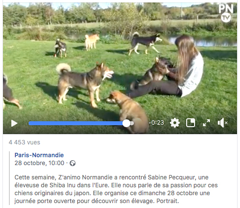 Journal-Paris-Normandie-facebook-video-zanimo-shiba-inu-CKK-Sabine-eure