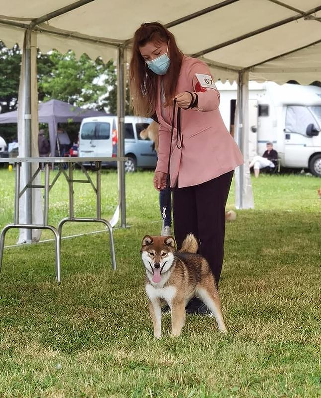 RAN-Rangiku-Umeko-Go-Chuken-Kiku-Kensha-shiba-inu-chiot-femelle-sesame-goma-female-best-puppy-BIS-expo-canine-regionale-elevage-bretagne-lalleu-CKK-2021