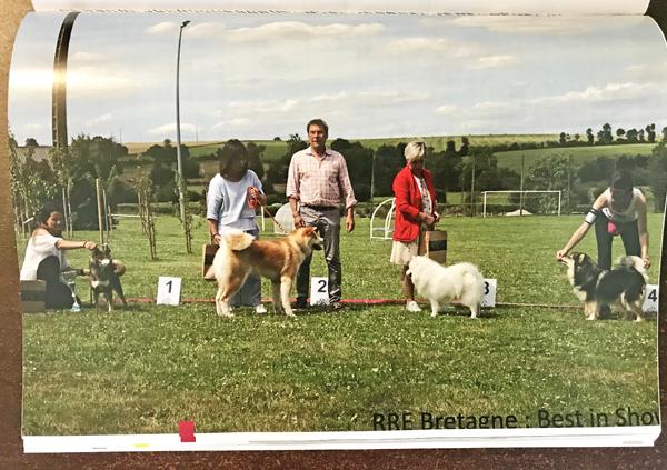 Regionale-elevage-Bretagne-Lalleu-2019-Jin-male-sesame-goma-shiba-inu-BIS-elevage-CKK