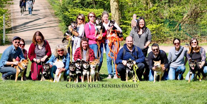 Shiba-inu-Chuken-kiku-kensha-family-CKK-elevage-chien-japonais-parc-sceau