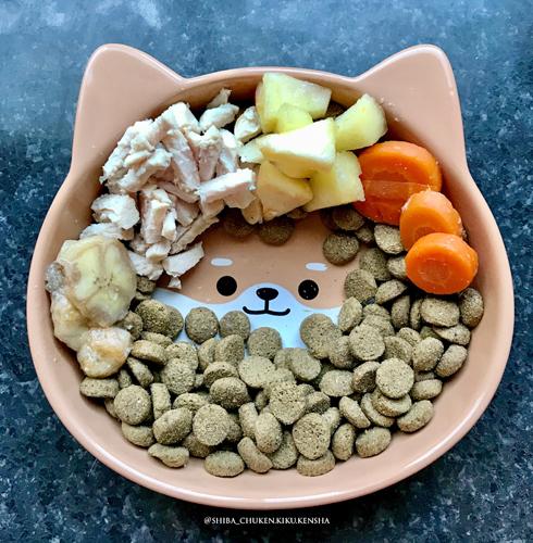 Shiba-inu-chien-repas-menager-alimentation-menagere-BARF-croquette-bio-naturelle-viande-cru-fraiche-qualite-RAW-feeding-sante-os-digestion-veterinaire-nutritionniste-ration-mixte