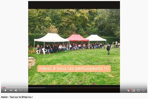Tout-sur-le-Shiba-inu-CKK-Education-canine-chien-primitif-elevage-Chuken-kiku-kensha-socialisation-chiot-caractere-question-race-japonaise-evenement-canin-journee-information-atelier-conference-seminaire-video