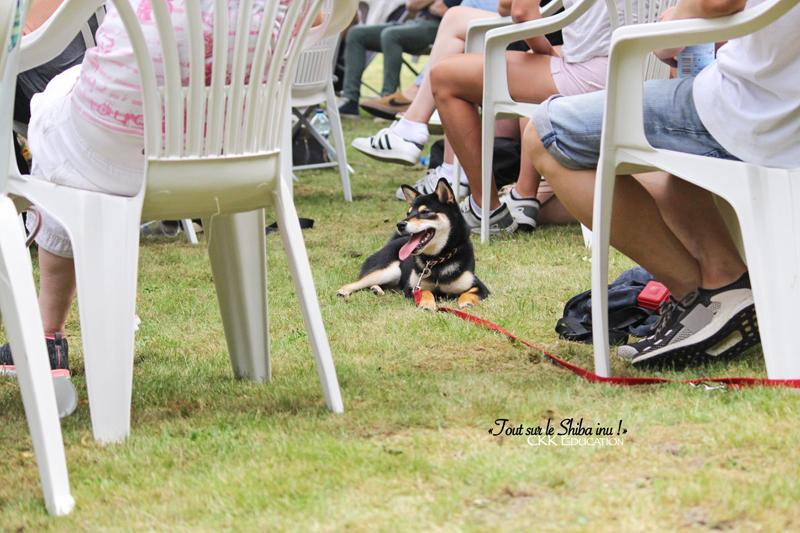 Tout-sur-le-Shiba-inu-seminaire-conference-cours-collectif-atelier-canin-education-canine-CKK-elevage-chien-accepte