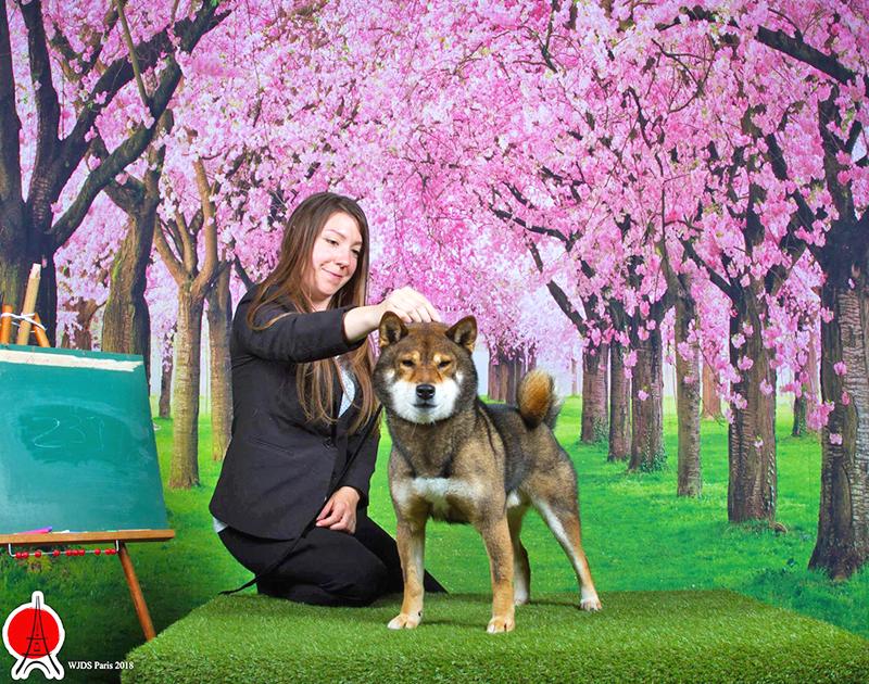 World-Japanese-Dog-Show-2018-Musashi-goma-shiba-sesame-WJDS