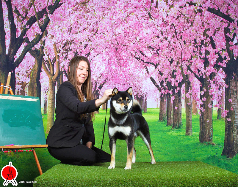 World-Japanese-Dog-Show-2018-Nanaki-male-shiba-nananishiki-WJDS