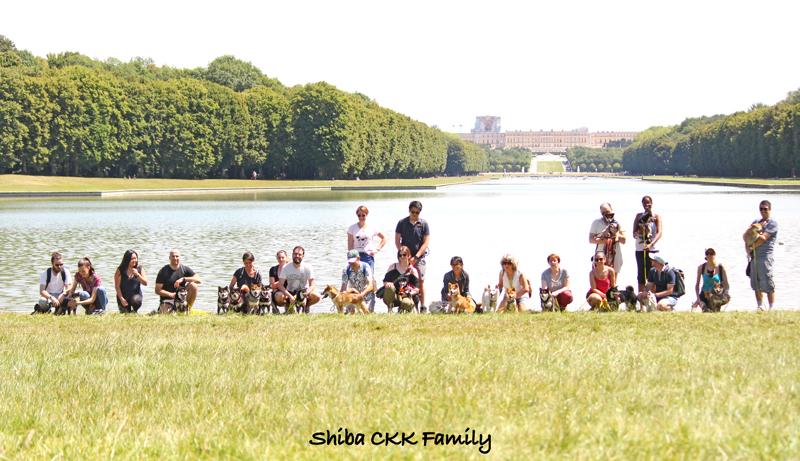 balade-CKK-family-Chuken-kiku-kensha-elevage-shiba-inu-Versailles-chien-japonais-chiot-adulte-shibe