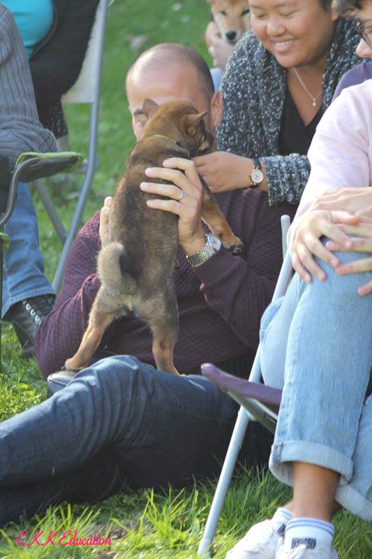 chiots-Tout-sur-le-Shiba-inu-seminaire-conference-cours-collectif-atelier-canin-education-canine-CKK-elevage