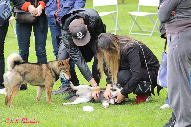 demonstration-Tout-sur-le-Shiba-inu-seminaire-conference-cours-collectif-atelier-canin-education-canine-CKK-elevage