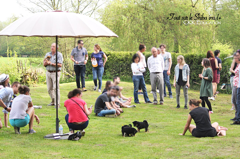 evenement-Tout-sur-le-Shiba-inu-seminaire-conference-cours-collectif-atelier-canin-education-canine-chiot-demonstration-question-CKK-elevage
