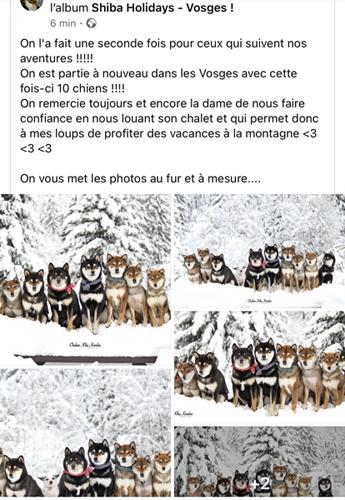 facebook-shiba-chuken-kiku-kensha-elevage-chien-japonais-vacances-sejour-Vosges-2021-meute-photo-japanese-dog-holidays-shibe