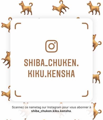 instagram-shiba-chuken-kiku-kensha-elevage-CKK