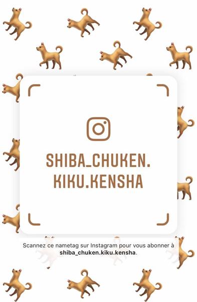 instagram-shiba-inu-chuken-kiku-kensha-elevage-CKK-nametag