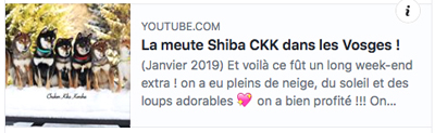 youtube-chuken-kiku-kensha-elevage-shiba-inu-CKK-video-vosges-vacances