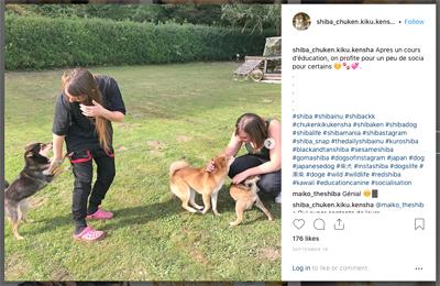 shiba-ckk-education-canine-femelle-chien-japonais-primitif