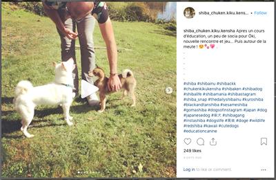shiba-ckk-education-canine-male-rappel-chien-japonais-primitif